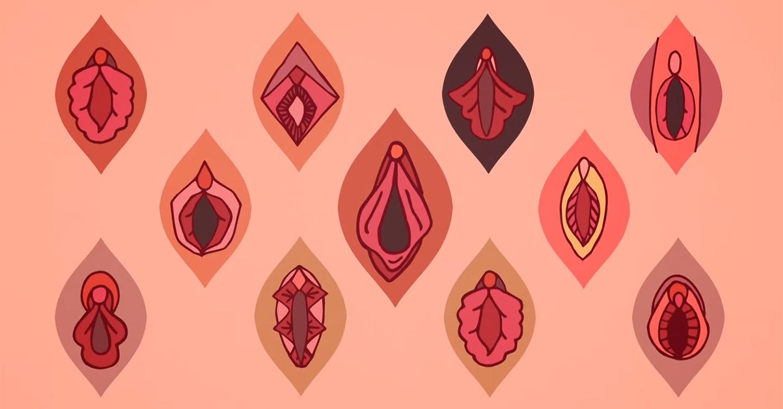 les gynécos friendly : viva la vulva